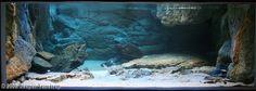 cichlid habitat