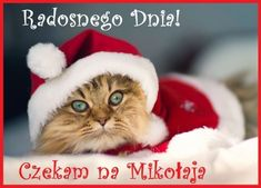 here comes santa-cat! Cute Kittens, Cats And Kittens, Christmas Kitten, Christmas Animals, Merry Christmas, Funny Christmas, Christmas Wishes, Christmas Buttons, Christmas Outfits