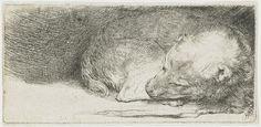 Rembrandt, Sleeping dog, ca. 1640