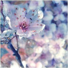 Fiore di ghiaccio !Meraviglioso !