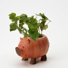 Home Grown Sweet Potato Pig Planter This Little Piggy, Little Pigs, Pig Kitchen, Growing Sweet Potatoes, Biscuit, Chia Pet, Pig Crafts, Mini Pigs, Flying Pig