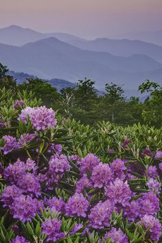 Good Morning at Carvers Gap  Roan Mountains - southern Appalachian Mountains