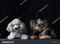 TETSUZO KIZZGAWAの写真素材、画像素材ポートフォリオ| Shutterstock Best Dogs, Animals, Image, Animaux, Animales, Animal, Dieren