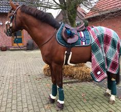 Equipement d'équitation vert et bordeaux (bandes de repos, couvre rein et tapis de selle)