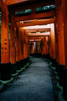 Old Fushimi Inari by PAkDocK @PAkDocK #xemtvhay
