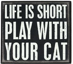 Life is short ; play with your cat