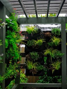 Note added..we have herbs included as well as salad fixings for patio convenience to your green privacy walls.