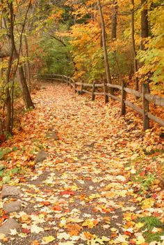 Tennessee.  LOVE.  Want to go there....like, everyday. When I'm in heaven it will always be fall....or it won't be heaven!  :-)