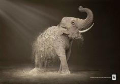 Desertification destroys 6,000 species every year. WWF