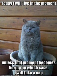 Today I will live in the moment... unless that moment becomes boring, in which case I will nap. funny cat memes - funny pictures of the day