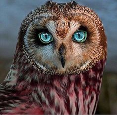 The starry eyes of an owl is a beautiful thing.