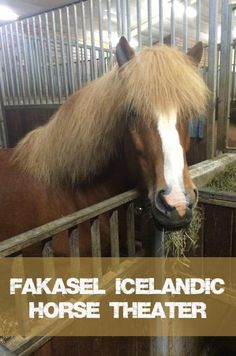 Learning about the Icelandic Horse at Fakasel Horse Theater in Iceland