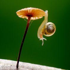 tiny snail, tiny mushroom by Whoopi Tiny Mushroom, Mushroom Fungi, Beautiful Creatures, Animals Beautiful, Cute Animals, Nature Animals, Science And Nature, Macro Photography, Natural World