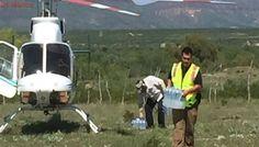 Gobierno de Chihuahua utiliza helicóptero para ayuda por lluvias
