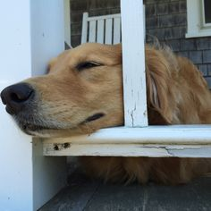 T Jun 30, 2015 Hanging on the porch as the cool sea air lulls me to deep sleep. Mama is nearby attempting to write but the demons of self doubt are strong today, distracting her, wasting her time, making her anxious. Me? Complete and utter summer bliss.
