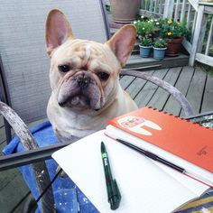 Romeo wants to write the next Great American Novel, but he's French? Poor Romeo', a Confused French Bulldog.