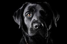 My labrador retriever, Panna.    http://gatiodaniel.hu  Oszkar Daniel Gati, on 500px