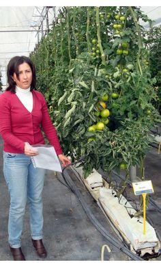 Eficiencia del uso del agua en invernadero - publicaciones.poscosecha.com