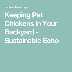 Keeping Pet Chickens In Your Backyard - Sustainable Echo