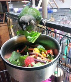 I see a lot of requests in bird groups and forums all over the web asking for a good recipe for chop. It's hard to give a definite or correct answer to that question because there simply isn&… Parrot Chop, Parrot Pet, Diy Parrot Toys, Parrot Food Recipe, Parakeet Food, Budgie Parakeet, Conure Bird, Conure Cage, Diy Bird Toys