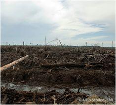 """""""La deforestación es una amenaza considerable en el mundo actual que afecta a la…"""