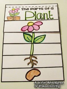 Parts of a plant flip book by AisforAdventuresofHomeschool | Teachers Pay Teachers