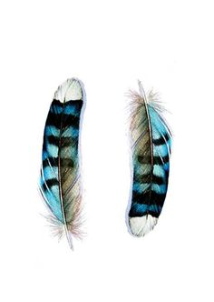 Blue Jay Feather, my favorite color, and its something different.