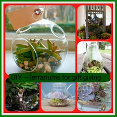 DIY ~ Terrariums for Gift Giving http://ourfairfieldhomeandgarden.com/diy-terrariums-for-gift-giving/