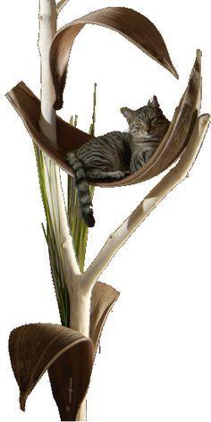 Die 18 Besten Bilder Von Kurs Katzenbaum