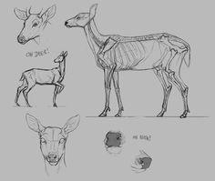 Imagem de anatomia, deer, and illustration