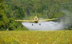 Livre-se dos pesticidas de forma sustentável