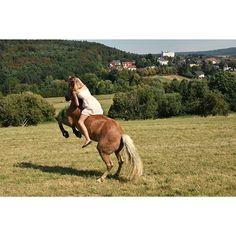 Instagram media by x.allegra.x - Can you feel this energy?🍀 Can you see it?💘 . Morgen kommt der hufschmied👼🔥😍 . . #bso_bw#sattel #trense #knoti #halsring #hafi #hafistute #haflinger #haflingerstute #pferd #caballo #horse trian #krämer #dressage #dressur #showjumping #springen #springreiten #bodenarbeit #horsemanship #horseman #fff #lfl #sfs #sie #verliebt #steigen #pferdepost_kleinacc #bp_post #allegraunder50 #pferdepost_kleinacc #bp_post