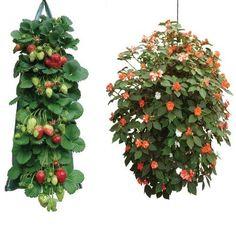 2 sacchi da appendere per la coltivazione di fragole/pomodori/fiori S&MC Gardenware http://www.amazon.it/dp/B00VEMJZRC/ref=cm_sw_r_pi_dp_Fi.Qwb0BXWK1D