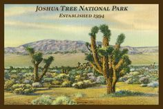 Quilt Block of vintage image printed on cotton. Ready to sew.  Joshua Tree National Park Set 1. Single 4x6 block $4.95. Set of 4 blocks with pattern $17.95.