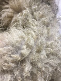 Shetland wool at the Sandwalker Ranch. This wool blends well with alpaca!  Do it at The Fleece Factory of the Rockies! #thefleecefactoryoftherockies Shetland Wool, Wool Blend, Ranch, Guest Ranch
