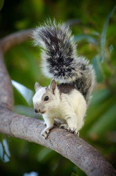 pictures of baby animals Playa Hermosa, Costa Rica Amazing Animals, Unusual Animals, Animals Beautiful, Nature Animals, Animals And Pets, Funny Animals, Cute Squirrel, Baby Squirrel, Squirrels