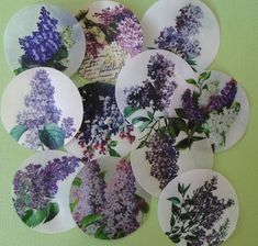 Lilac Botanical Floral Edible Image Wafer by QueenofTartsWafers, $9.50 Etsy