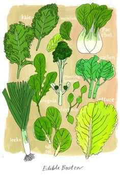 Julia Rothman (for Edible Boston magazine). Green Fruit, Fruit And Veg, Botanical Illustration, Illustration Art, Herb Farm, Dragon Ball Z Shirt, Edible Garden, Food Illustrations, Art Sketchbook