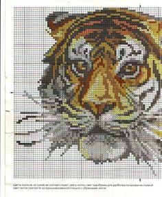 Diversidade: O Tigre...