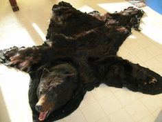 Bear Rug. I Would So Love This But It Would Be Better If It Could
