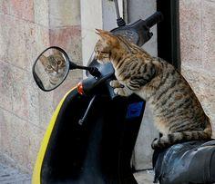 Kitty in mirror