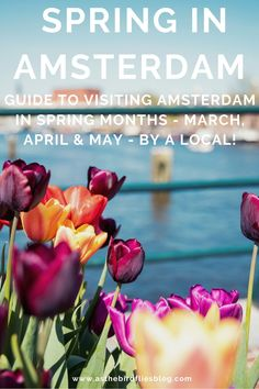 Spring in Amsterdam / Springtime in Amsterdam / Amsterdam in Spring / Spring Months in Amsterdam / March in Amsterdam / April in Amsterdam / May in Amsterdam / Amsterdam in Springtime / Tulips in Amsterdam / Blossom in Amsterdam / Spring Flowers in Amsterdam Amsterdam Travel Guide, Visit Amsterdam, Travel Advice, Travel Guides, Spring Months, Tulip, Things To Do, Europe, Months Of Spring