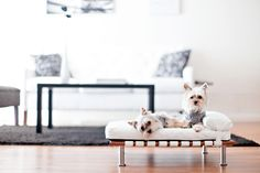Dog Day Design: Stylish Ways to Incorporate Fido into Your Decor// dog furniture