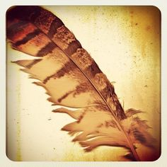 Owl Feather - Owls have long been seen as the Keeper of Spirits, a psychopomp. Wisdom, foresight, keeper of sacred knowledge. Companion of mystics, seers, and medicine people.