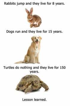 As a kid I had three rabbits, a turtle, a hamster, a cat, and 4 dogs. Not all at once though.