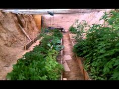 "The ""Walipini"" is an underground greenhouse made to allow for edible plants to be grown year-round. It's cheap, simple, and could change everything."