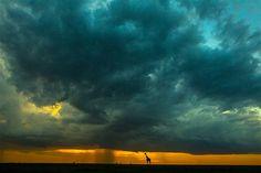 Imagen: Salidas y puestas de sol en la maravillosa Masai Mara (© REX FEATURES/Paul Goldstein)