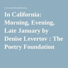 In California: Morning, Evening, Late January by Denise Levertov : The Poetry Foundation