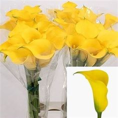 Calla Lily Gold Medal (zantedeschia) is a Yellow Arum type lily. It is available wholesale in Batches of 10 stems. Very popular for contemporary floristry and wedding flowers. A stjunningly beautiful shaped and coloured flower. A statement flower. August Flowers, Flowers Uk, Plastic Flowers, Elegant Flowers, Amazing Flowers, Wedding Flowers, Single Flowers, Yellow Flowers, Trumpet Lily