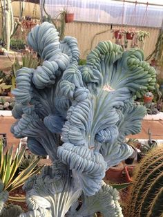 Cool Succulents!